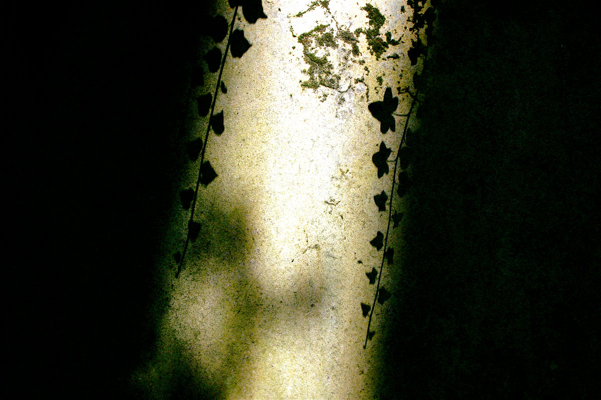 leaf-shadow.jpg